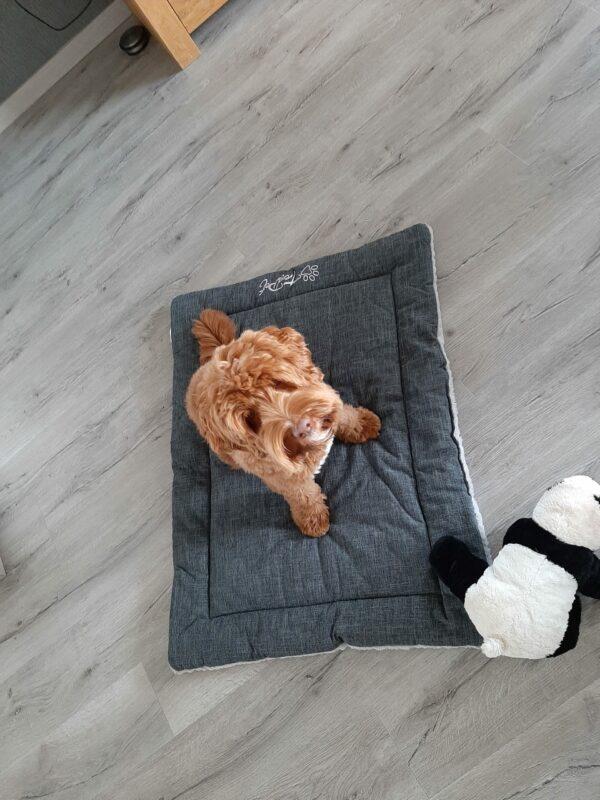 Hondendeken Grijs (Trendpet Heaven)